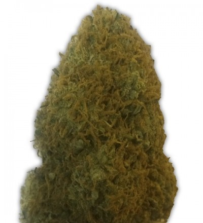 Champion Feminized by Heavyweight Seeds