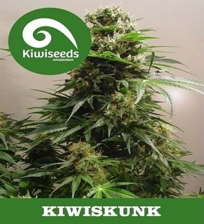 Kiwiskunk by Kiwi Seeds