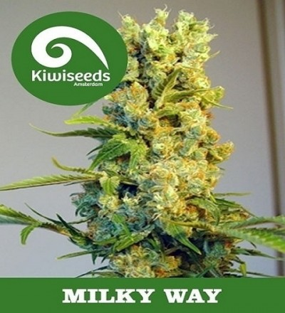 Milky Way by Kiwi Seeds
