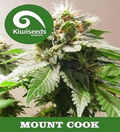 MT Cook by Kiwi Seeds