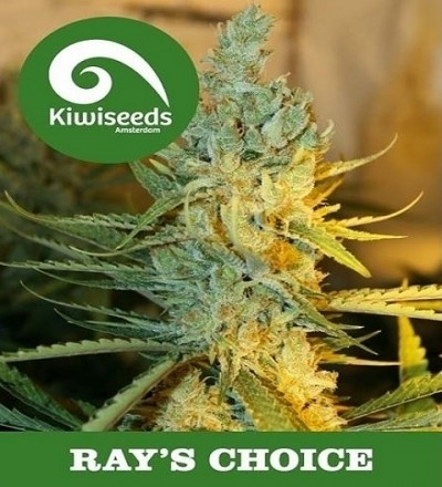 Ray's Choice by Kiwi Seeds