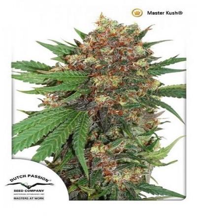 Masterkush by DP Seeds