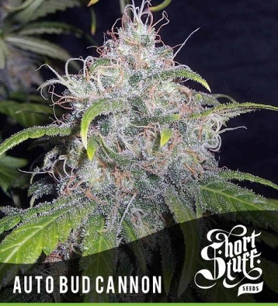 Auto Bud Cannon - Short Stuff