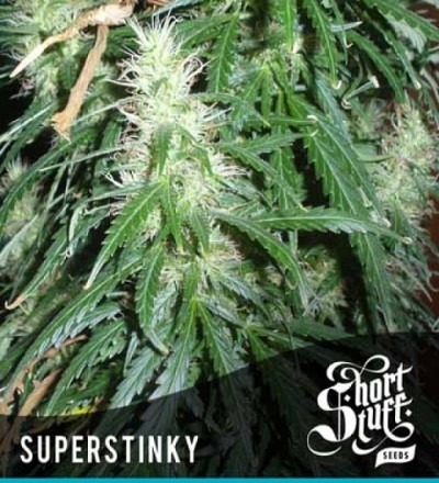 Short Stuff Super Stinky Super Auto