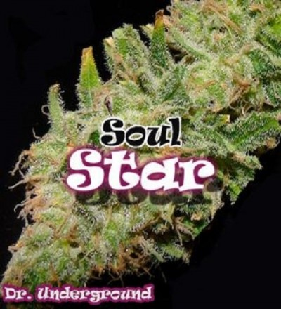 Soul Star by Dr. Underground Seeds