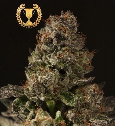 Strawberry Sour Diesel Regular - Devils Harvest