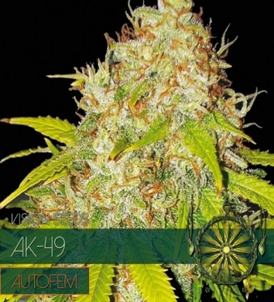 AK 49 Auto by Vision Seeds