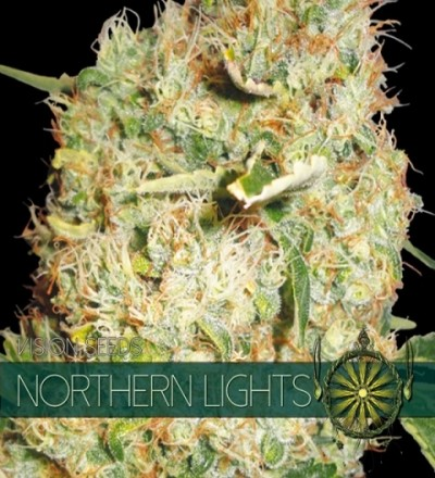 Northern Lights Feminized by Vision Seeds