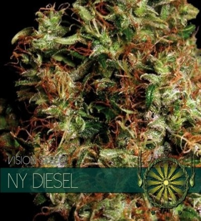 NY Diesel Feminized by Vision Seeds