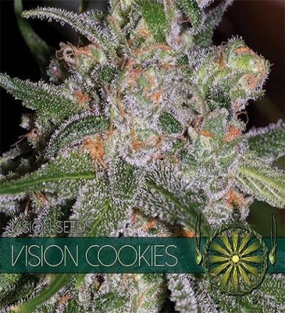 Vision Cookies Feminized by Vision Seeds