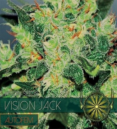 Vision Jack Auto by Vision Seeds