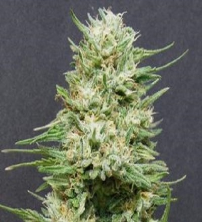 Wedding Cake by Bighead Seeds