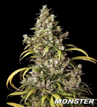 Monster by Eva Seeds