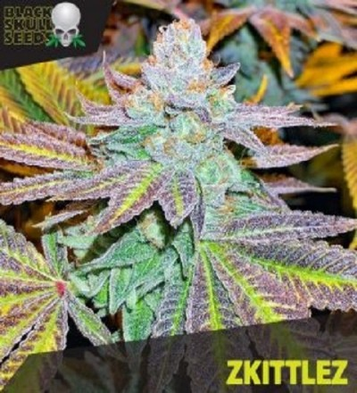 Zkittlez by Black Skull Seeds
