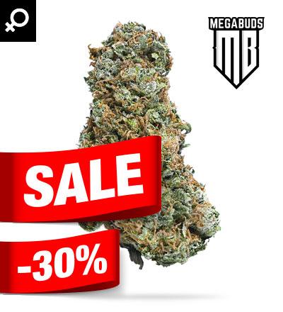 BIG BRUCE Marijuana Seeds