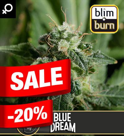 BLUE DREAM FEM - BLIM BURN