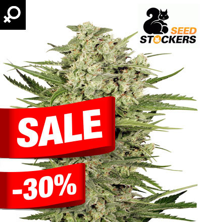 CHEESE FEM BY SEED STOCKERS