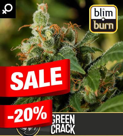 GREEN CRACK FEM - BLIM BURN