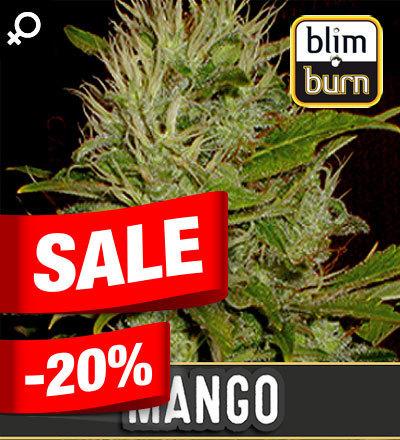 MANGO FEM - BLIM BURN