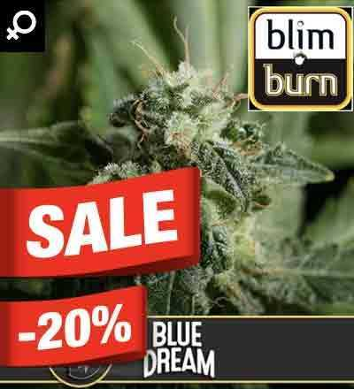 Blue Dream By Blim Burn Seeds