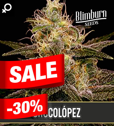 Chocolopez by Blim Burn Seeds