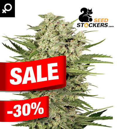 Cheese by Seedstockers