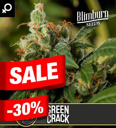 Green Crack Feminized by Blim Burn Seeds