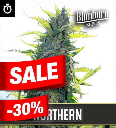 Northern Automatic by Blim Burn Seeds