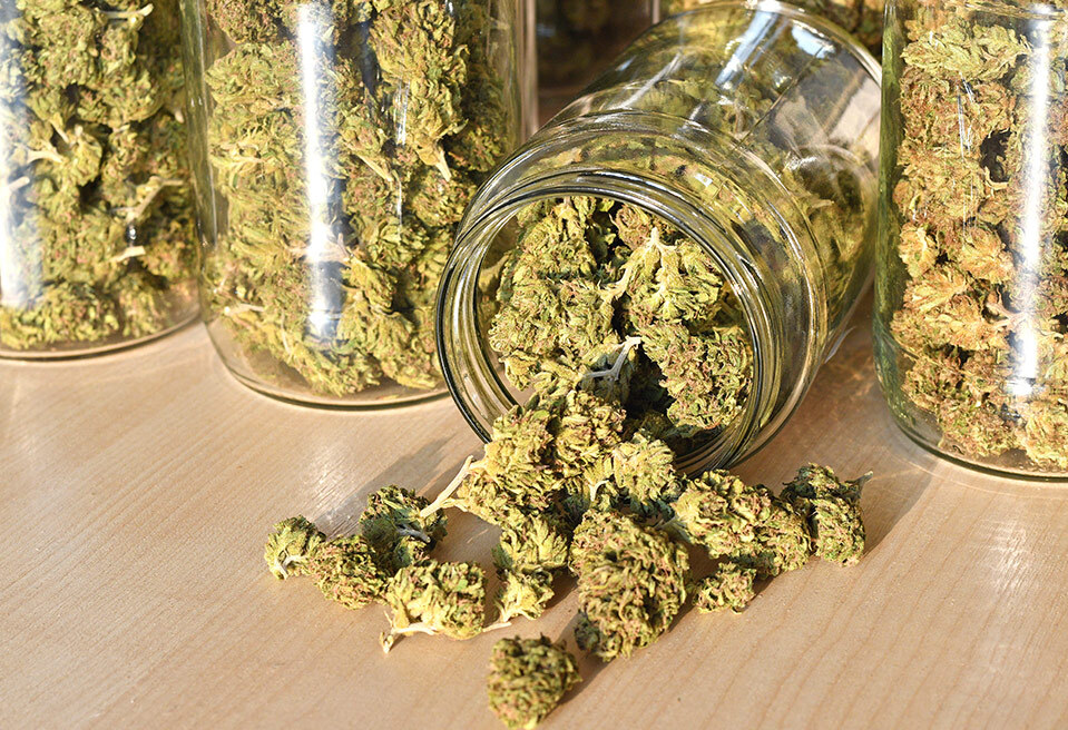 Cured cannabis in jars