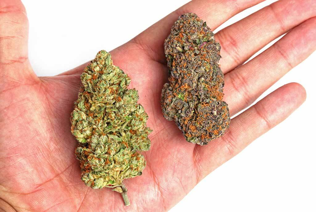 2 different cannabis buds